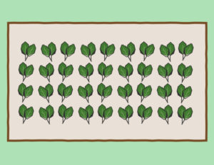 How to layout your spinach