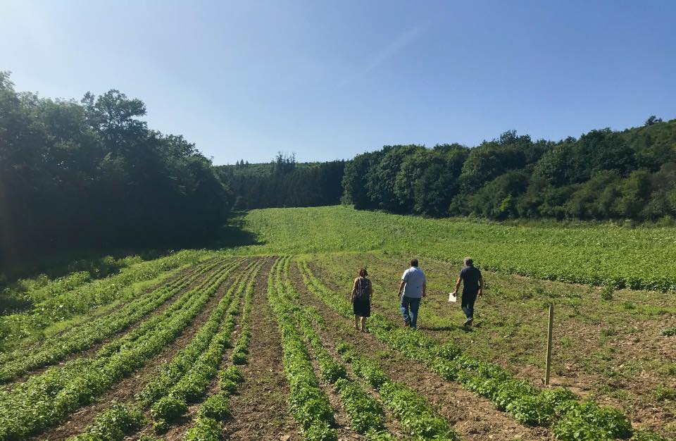 Green fields in Luxembourg at the GROW Place