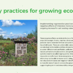 Thumbnail of an info sheet about growing ecocsystems
