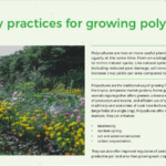 Thumbnail of an info sheet about growing polycultures